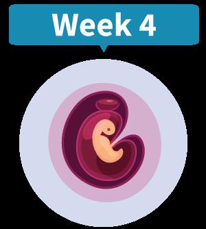 Positieve zwangerschapstest? Bel ons en maak een afspraak voor het eerste consult!